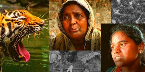 Tiger widows of Sundarbans