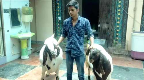 Man buys two goats for a whopping ₹4.5 lakh for Bakri Eid