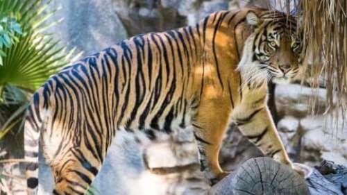 India's best national parks for tiger spotting!