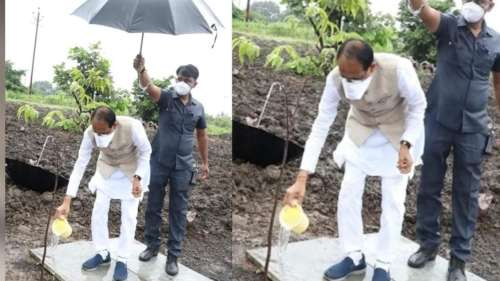 Shivraj Singh Chouhan बारिश के बीच पौधे को पानी देते आए नज़र, सोशल मीडिया पर ट्रोल हुए 'मामा जी'