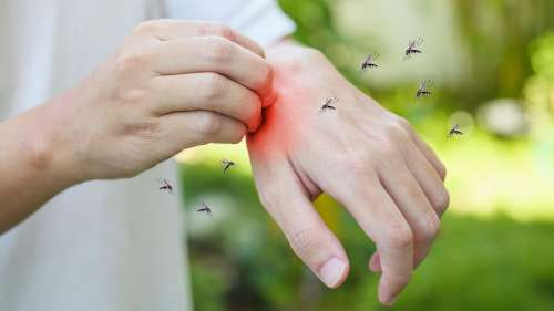 Mosquito bite: क्या आपको भी मच्छर ज़्यादा काटते हैं? जानिये क्या कहती है स्टडी