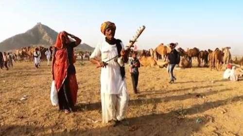 Covid impact: world famous Pushkar Mela unlikely to be held this year