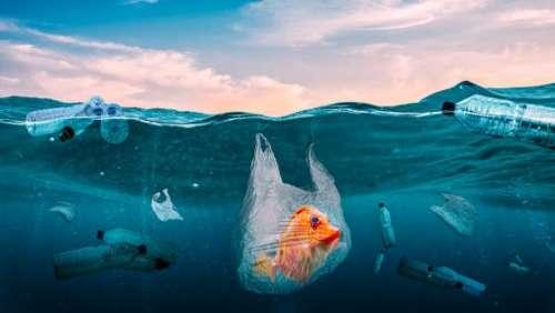 International Plastic Bag free Day 2021: बैन के बाद भी लगातार हो रहा इसका इस्तेमाल