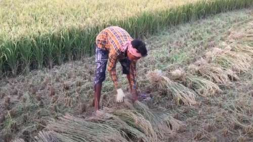 MSP for Kharif crops hiked