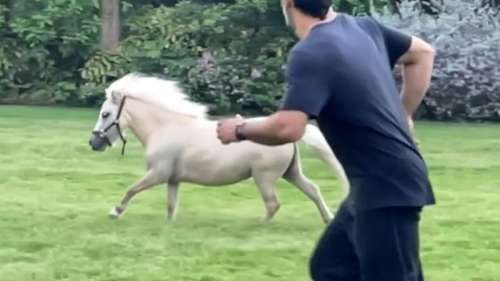 Watch! Dhoni vs pony, MSD races with a horse at his farmhouse