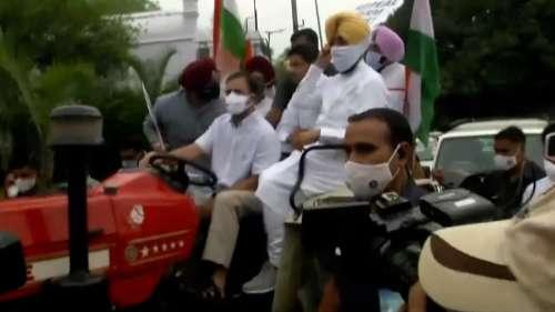Rahul Gandhi : কৃষি আইনের প্রতিবাদ, ট্র্যাক্টর চালিয়ে সংসদে রাহুল গান্ধি