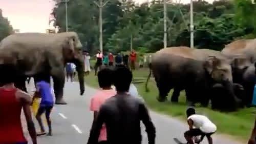 Assam: Locals tease wild elephants crossing highway, animal stomps down man