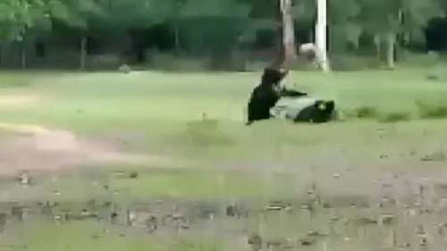 Watch: Momma bear, cub play football, video goes viral