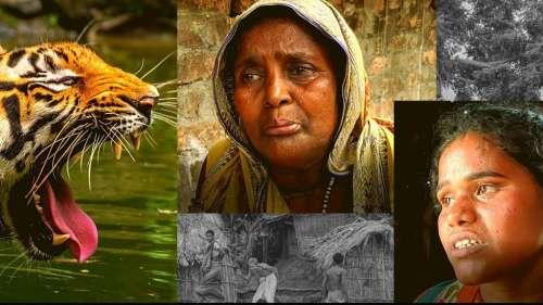 Tiger widows of Sunderbans struggle to survive   DataBaaz