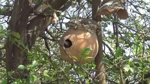 बिहार: पक्षियों को लेकर इतना प्यार कि शख्स ने घर में बना डाले कई घोसले