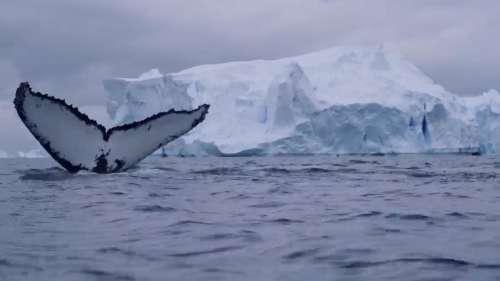 Record Heat In Antarctica: अंटार्कटिका में अब तक का सबसे गर्म तापमान रिकार्ड किया गया, खतरे की घंटी!