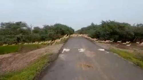Video Viral: जब साथ निकले अनगिनत हिरण को देख पीएम मोदी भी हुए हैरान- बोले Excellent!