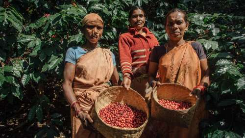Bold & brewed: Indian brands for your local, artisanal coffee fix