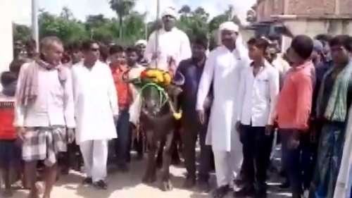 Bihar Panchayat Election: भैंस पर सवार होकर नामांकन करने पहुंचा प्रत्याशी, कहा- यही मेरी सवारी