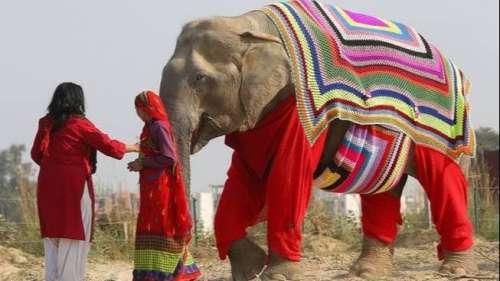 ठंड से बचाने के लिए हाथी को पहनाया बुना हुआ जंपर और कवर, तस्वीर वायरल