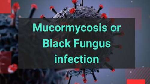 editorji Covid guide   What is Black Fungus infection and how to prevent it?