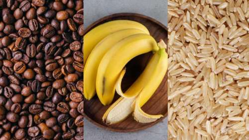 Coffee or rice: Which one of your favourite foods are at risk of extinction?