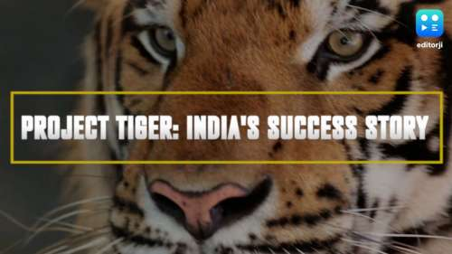 In depth | The Tiger Project and India's success story