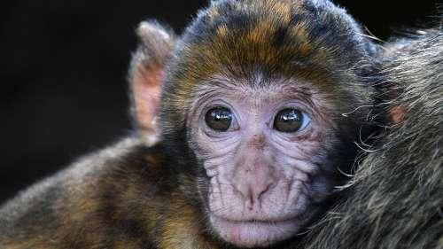 Spot a monkey de-stressing in a hot spring