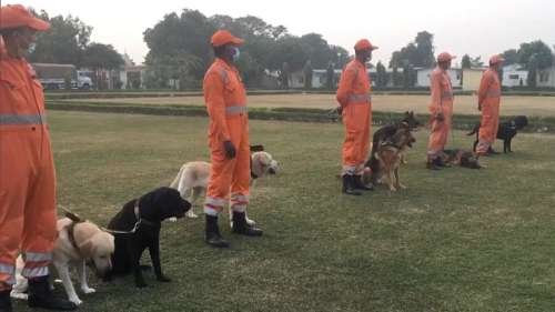 NDRF now training Indian breed dogs for dog squad, street dogs next