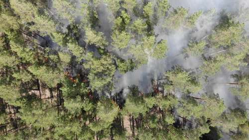 Amazon forests at risk