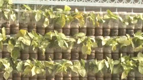 ফেলনা প্লাস্টিকের তৈরি বাগান