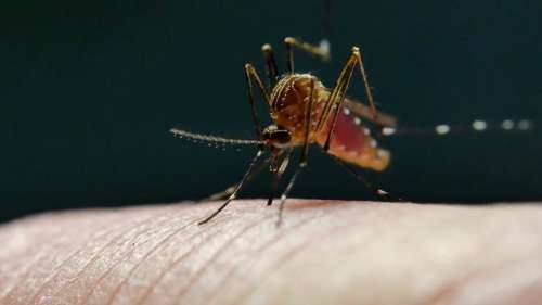 Drug to cure dengue