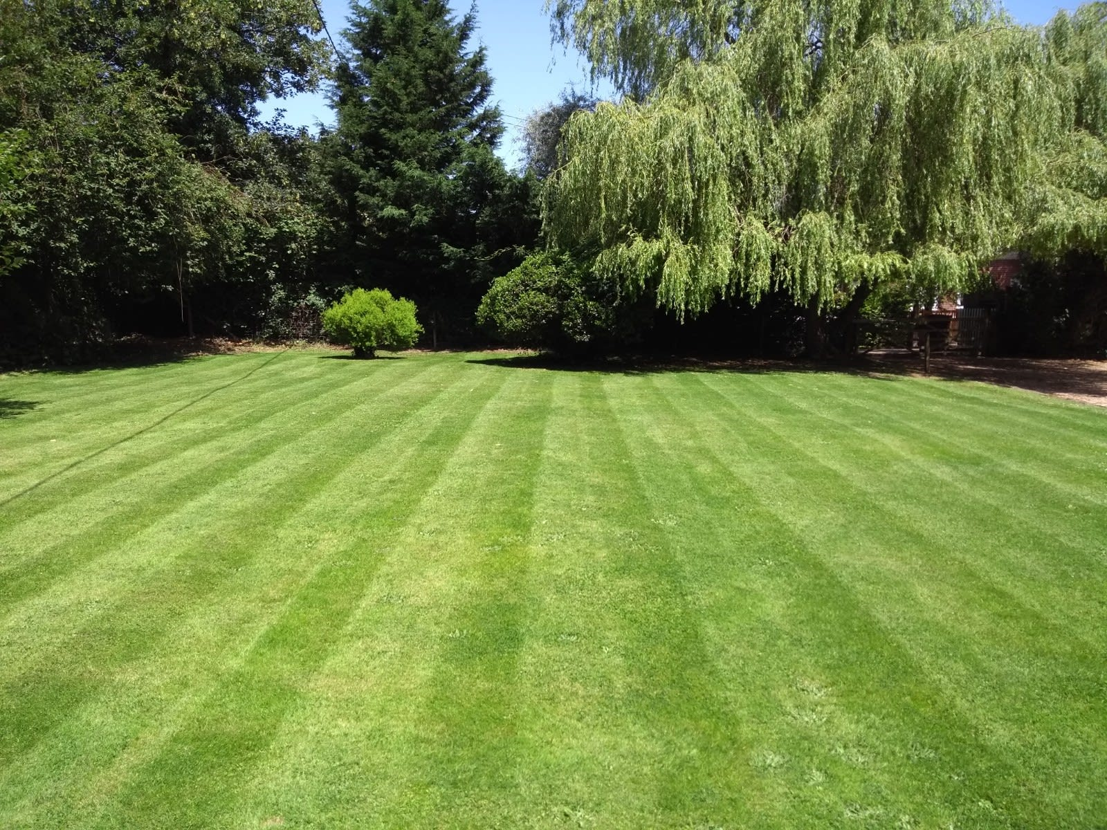 Ed's gardening business stripy summer lawn