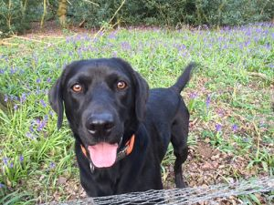 Ed's Garden Maintenance's own dog Angus