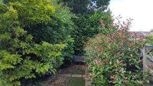 A garden in Raynes Park before Ed's Garden Maintenance Garden Clearance Service