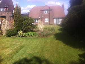 Controlling Moss on Lawns after a wet and mild winter by Ed's Garden Maintenance