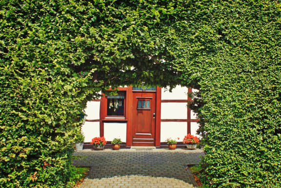 Beech hedge with arch