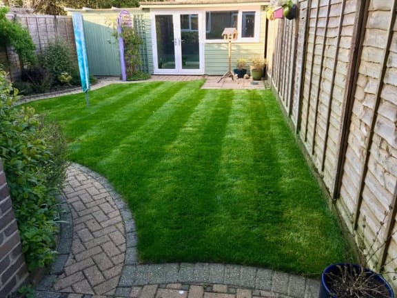 Lawn stripes after turfing job