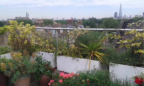 Maintaining Balcony Gardens in South East London
