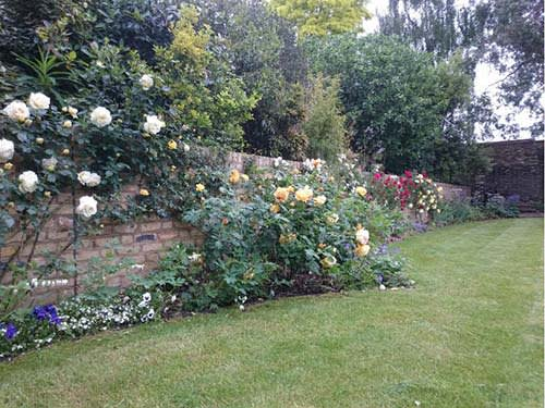 Clearing Garden Border Edges
