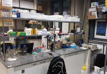 Possível corte de bolsas do CNPq ameaça pesquisa da UFMG de combate ao vírus da dengue
