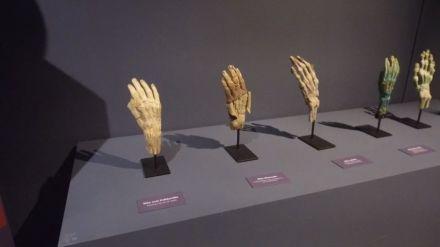 Exposição na Ufes reúne partes reais do corpo humano e associa biologia à matemática