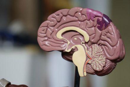 Bolsas integrais para doutorado na Inglaterra na área de neurociência