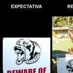 Expectativa vs Realidade [2]