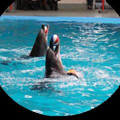 İstanbul Dolphinarium Yunusları