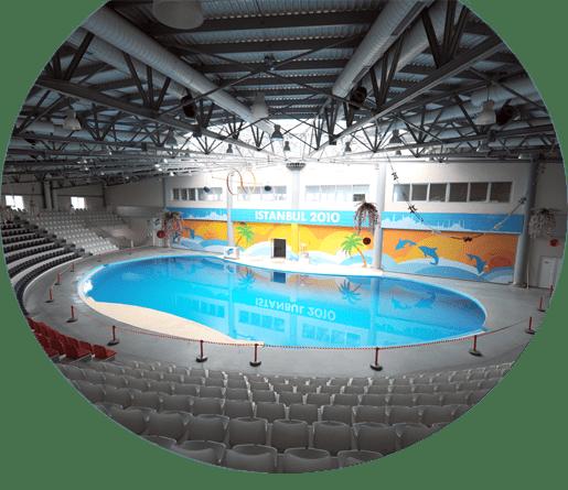 İstanbul Dolphinarium Yıl Sonuna Kadar Geçerlidir Thumb