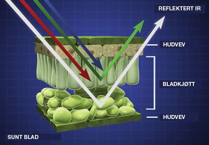 Øker kunnskapen om nitrogensensor