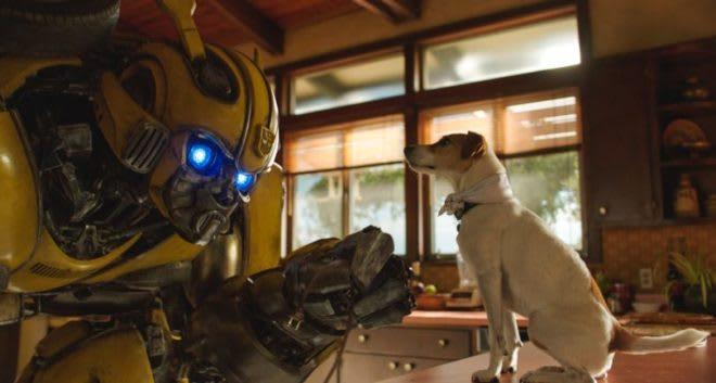 bumblebee with dog