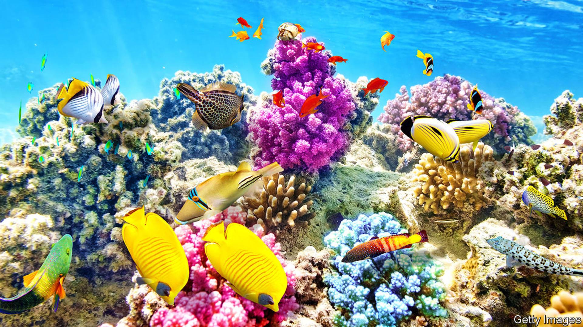 Recifuri de coral