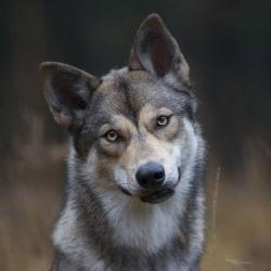 C george spunk wolfes final