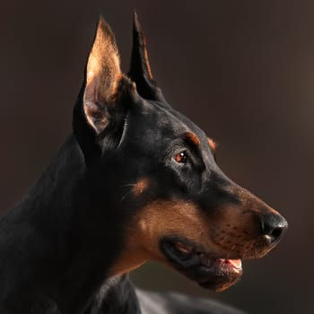Tracy G.'s dog