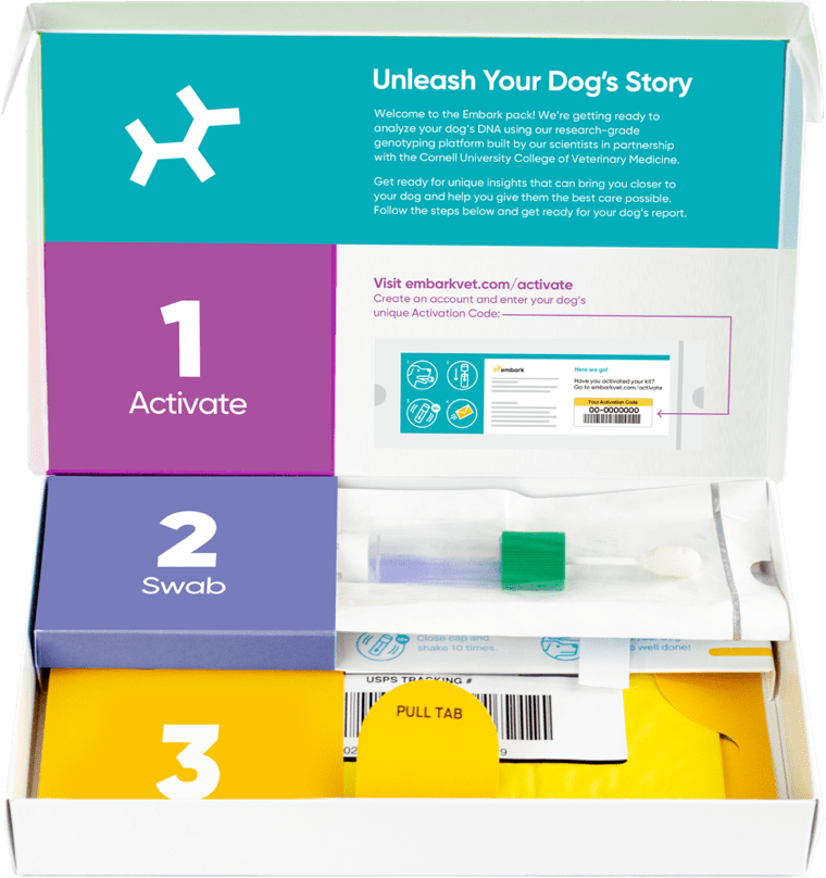 Embark, the most accurate dog DNA test on the market, comes with a swab, an envelope to send the sample back for processing, and instructions on how to register your kit.