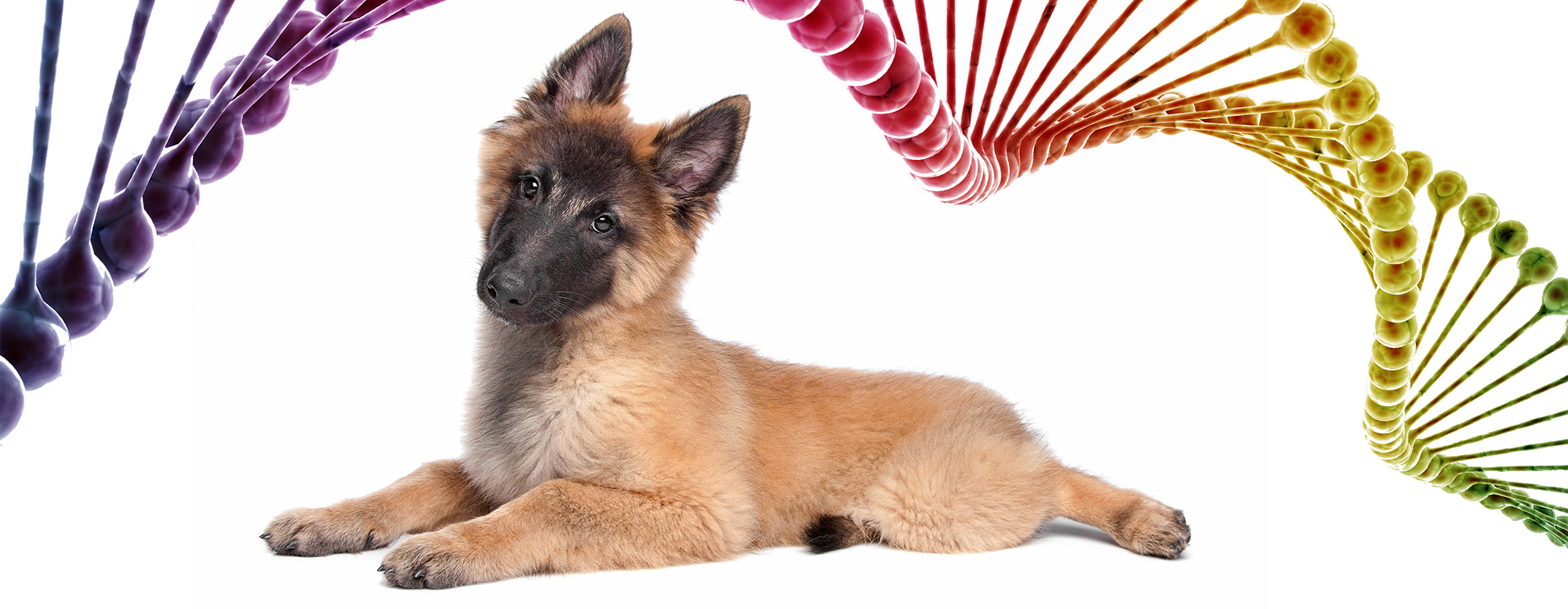 Beyond Dog DNA tests: What Breeders Should Know About Complex Genetics