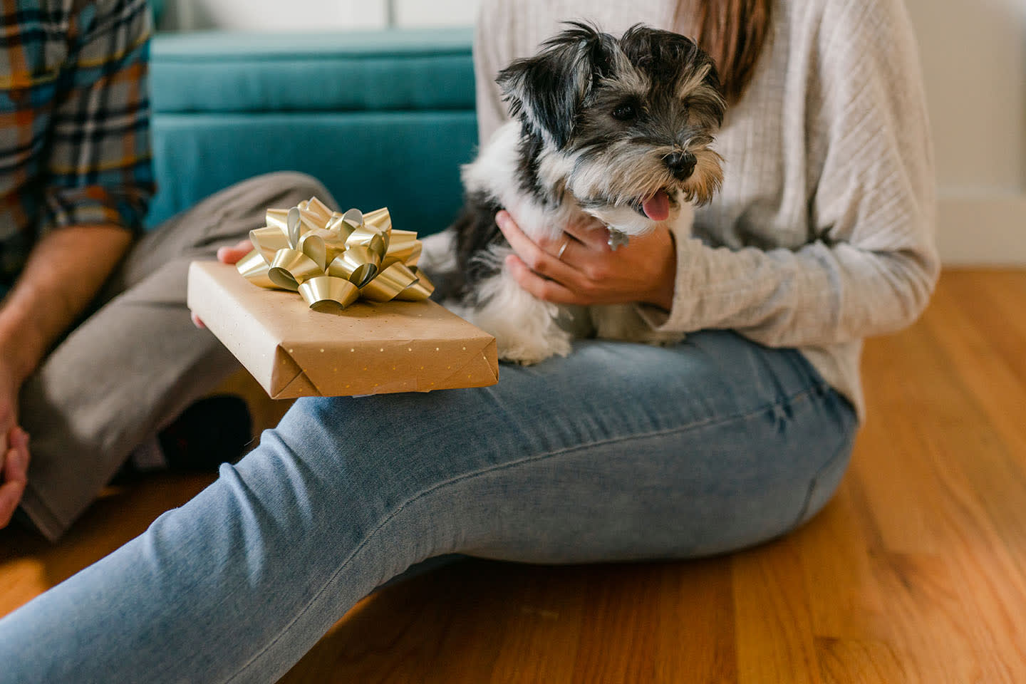 dog sitting on person's lap next to wrapped Embark Dog DNA Kit gift