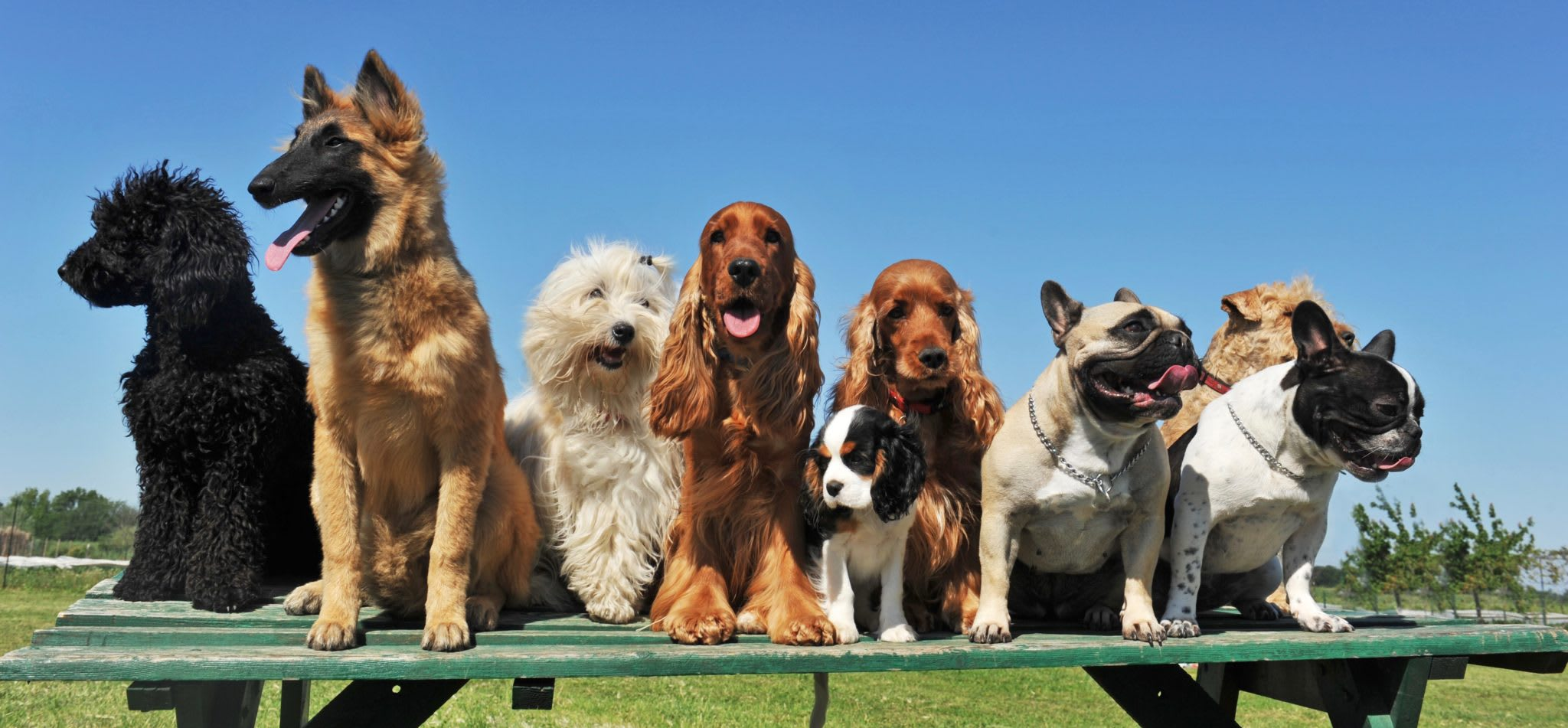 embark pack of dogs